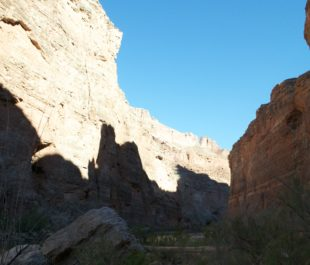 Grand Canyon   Lea Brovedani