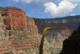 Hermit Trail | Corrina Peipon