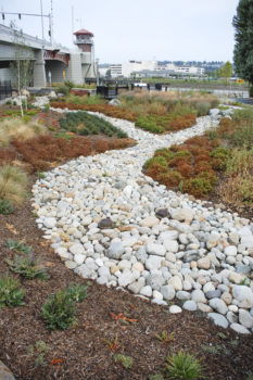 Rain gardens adjacent to South Park Bridge crossing the lower Duwamish help treat all the road runoff for the west side of the bridge. | Natalie Jamerson, Washington Environmental Council