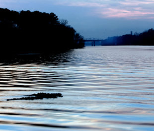 Black Warrior River | David Smith