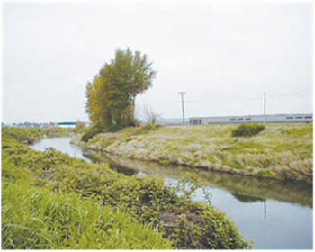 The middle and lower sections of the Green-Duwamish River need more shade. Development has led to few trees on riverbanks and increased water temperatures. | Washington Department of Ecology