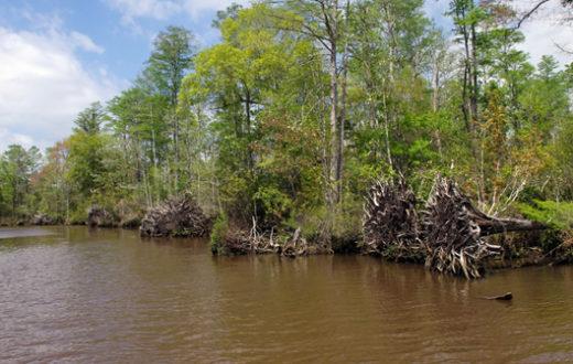 Whiskey Bayou, Pascagoula River. | Nancy Blue