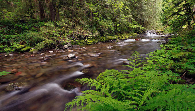 Oregon's Sandy River, which includes two federally designated Wild and Scenic River segments.   Bureau of Land Management