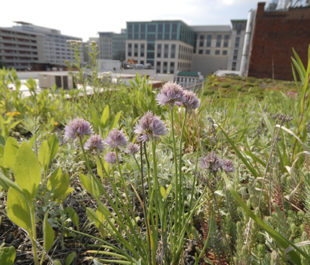 Green roof at American Society of Landscape Architects. | ASLA