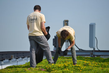 Maintenance of a 6,400 square foot Green Roof on a Chicago skyscraper. | Center for Neighborhood Technology, Creative Commons