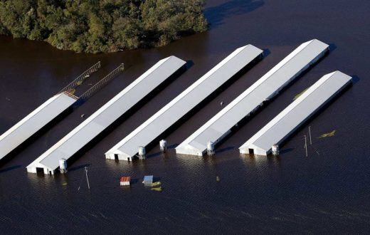 Neuse River CAFOs | Rick Dove, Waterkeeper Alliance