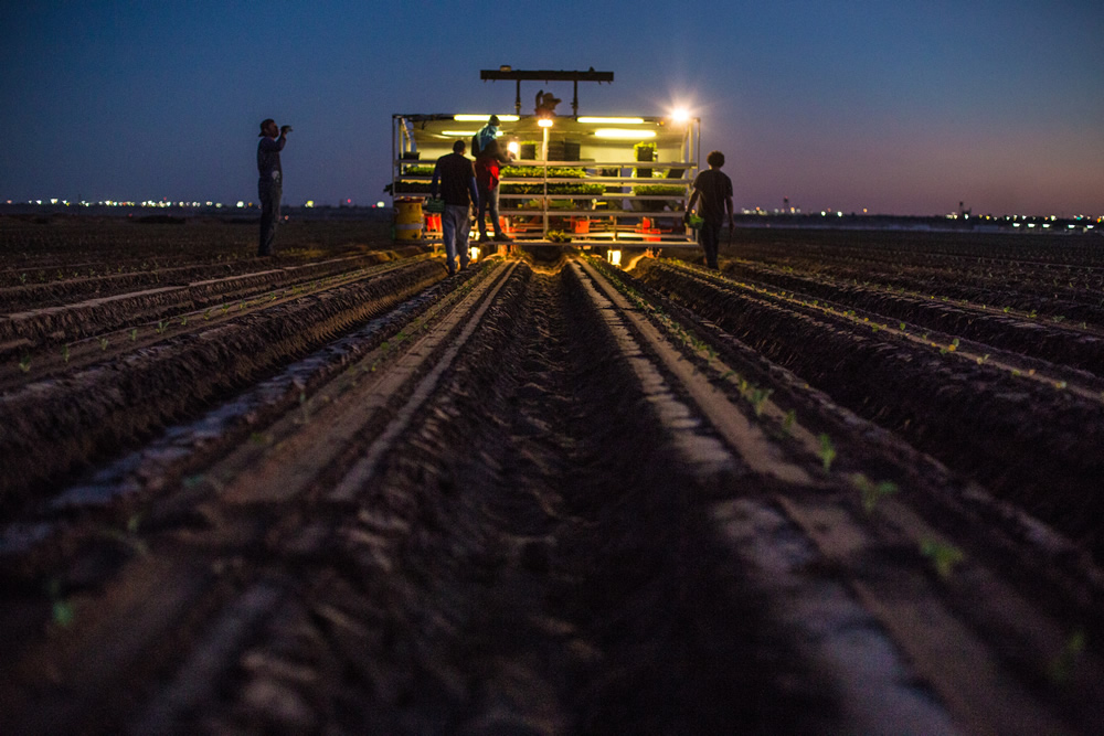 Working well into the night, the people of the Colorado River grow food for a nation. | Amy Martin