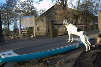 Betty getting ready for her first SUP session on the Waccamaw Riverwalk in Conway, SC. | Grace Sutz Photography