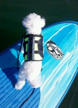 TJ takes the nose as he enjoys paddle boarding with his owner wearing his canine flotation device. TJ is a veteran SUP Pup and enjoys the lakes and rivers of SC. | Jennifer Graham