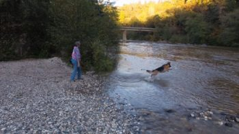 A dog and it's owner play along the banks of the Bear River. | Photo: The Voice of the Bear River