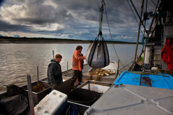 Bristol Bay and its associated ecosystem are home to some of the most treasured salmon fisheries. | Bob Waldrop