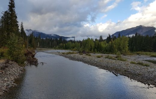 A healthy, connected floodplain on the Cooper River in the Central Cascades of WA | Photo: Jonathon Loos