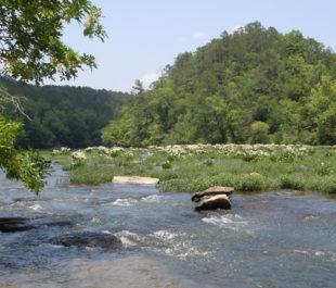 Cahaba River, Alabama | Photo: g - s - h (Flickr)