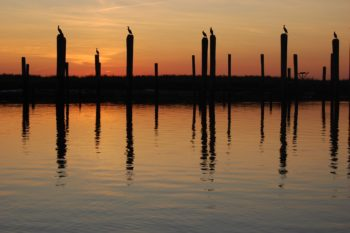 Cormorants at the mouth of the Mispillion in Delaware. | Eric Straw