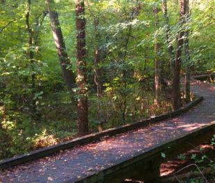 Flat Creek Nature Area, Peachtree City, Georgia.   Southern Conservation Trust