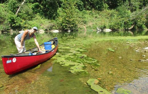 Algae forms on the Buffalo National River.   Teresa Turk
