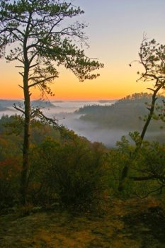 Fog covers the Red River Gorge at sunrise. | Ulrich Burkhalter (Flickr)