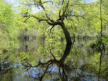 Four Hole Swamp, SC | Gerrit Jobsis
