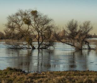 San Joaquin, Grasslands State Park   Photo by Daniel Nylen