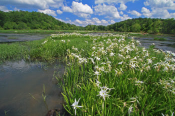 Flint River, GA   Photo by Alan Cressler