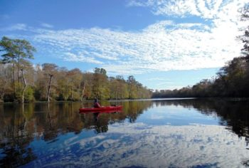Waccamaw River | Photo by Gator Bait Adventure Tours