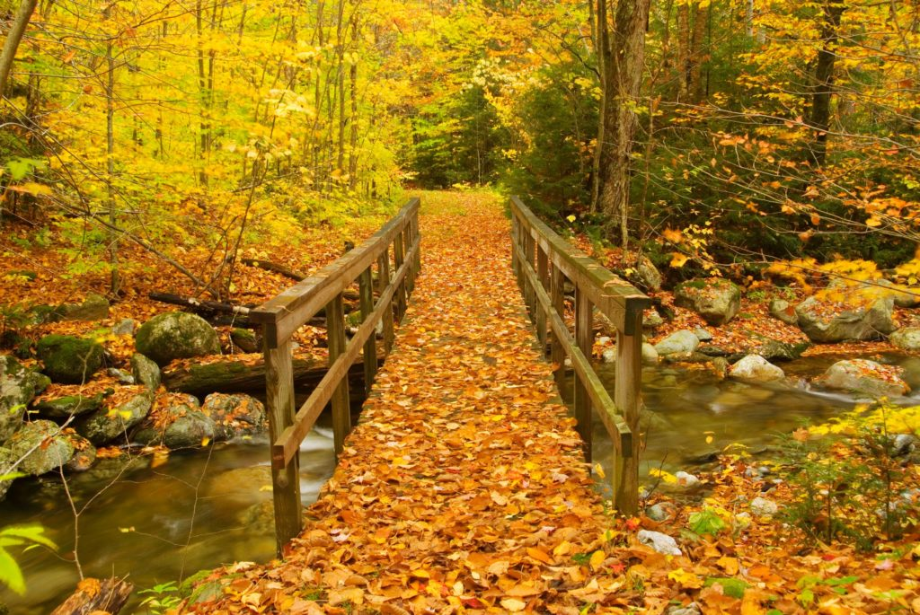 Our Top 5 River Destinations For Fall Foliage - American Rivers