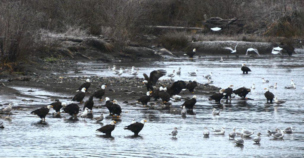 Nooksack River, WA | Photo by Chuck Hilliard