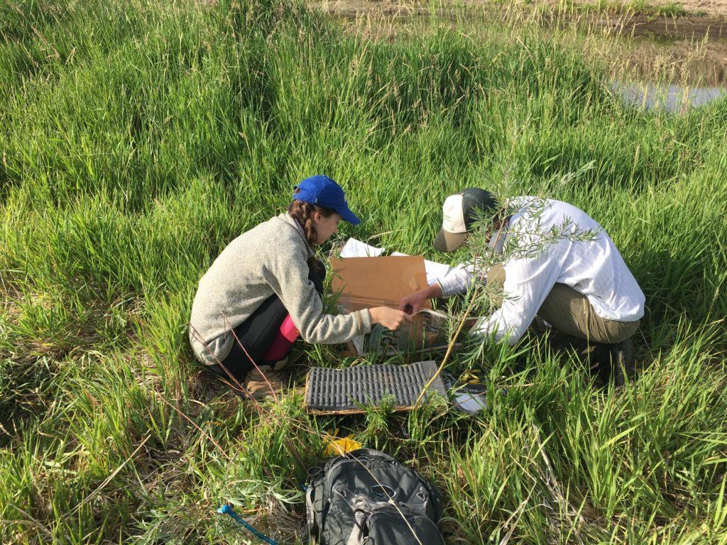 Riparian Vegetation Assessment | Photo by Daniel Boyes, Rio Grande Headwater Restoration Project