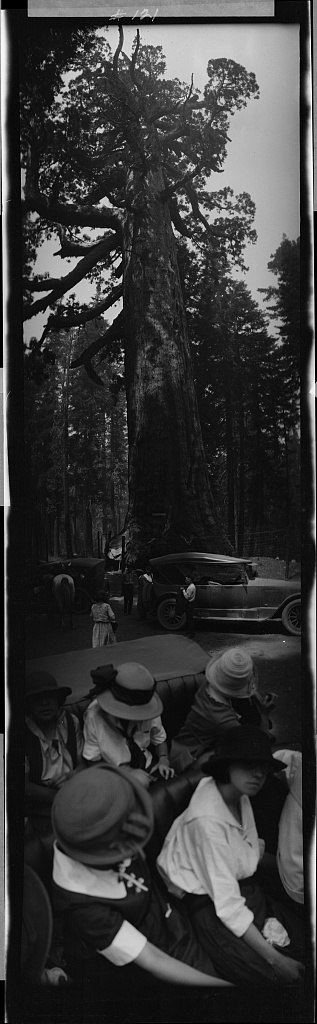 Price, Albert M, photographer. Yosemite, Grizzly Giant sequoia. None. [Between 1914 and 1929] Photograph. Retrieved from the Library of Congress.