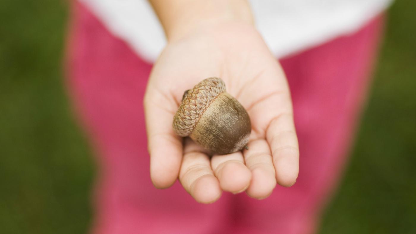 acorns-poisonous-children
