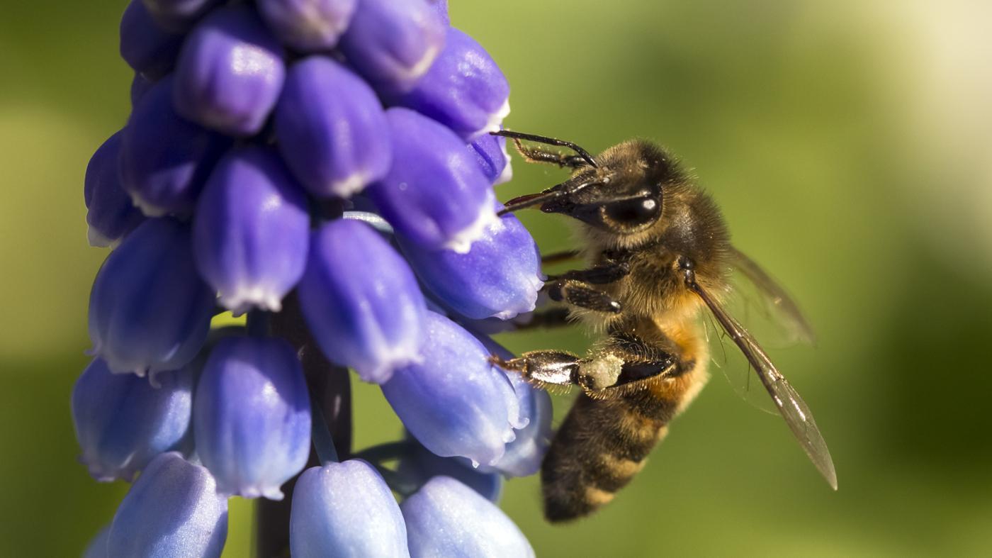 advantages-disadvantages-cross-pollination