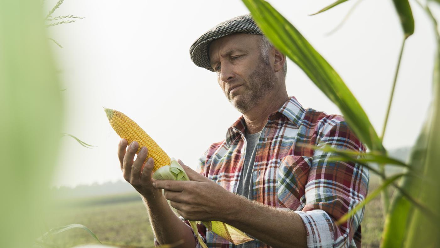 agro-based-industries