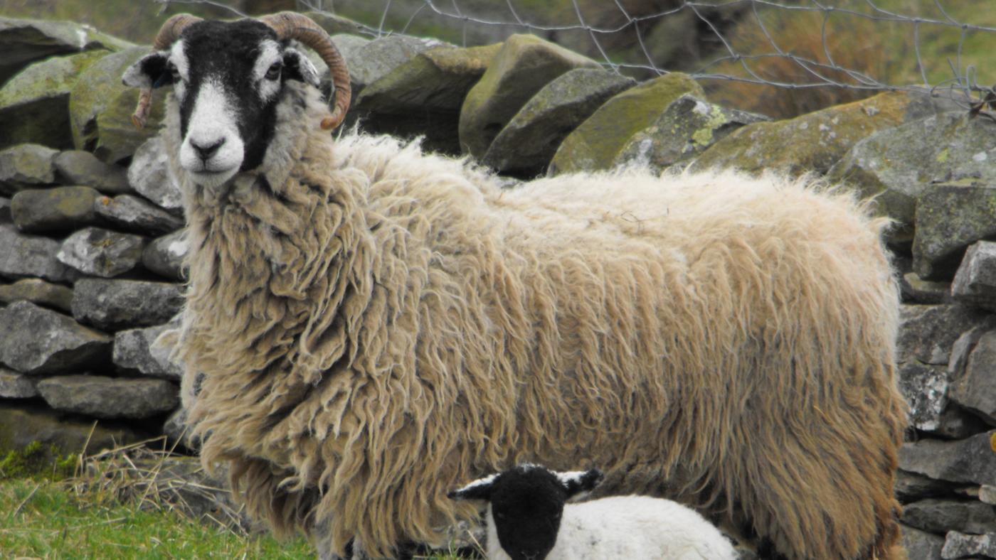 allegory-examples-animal-farm