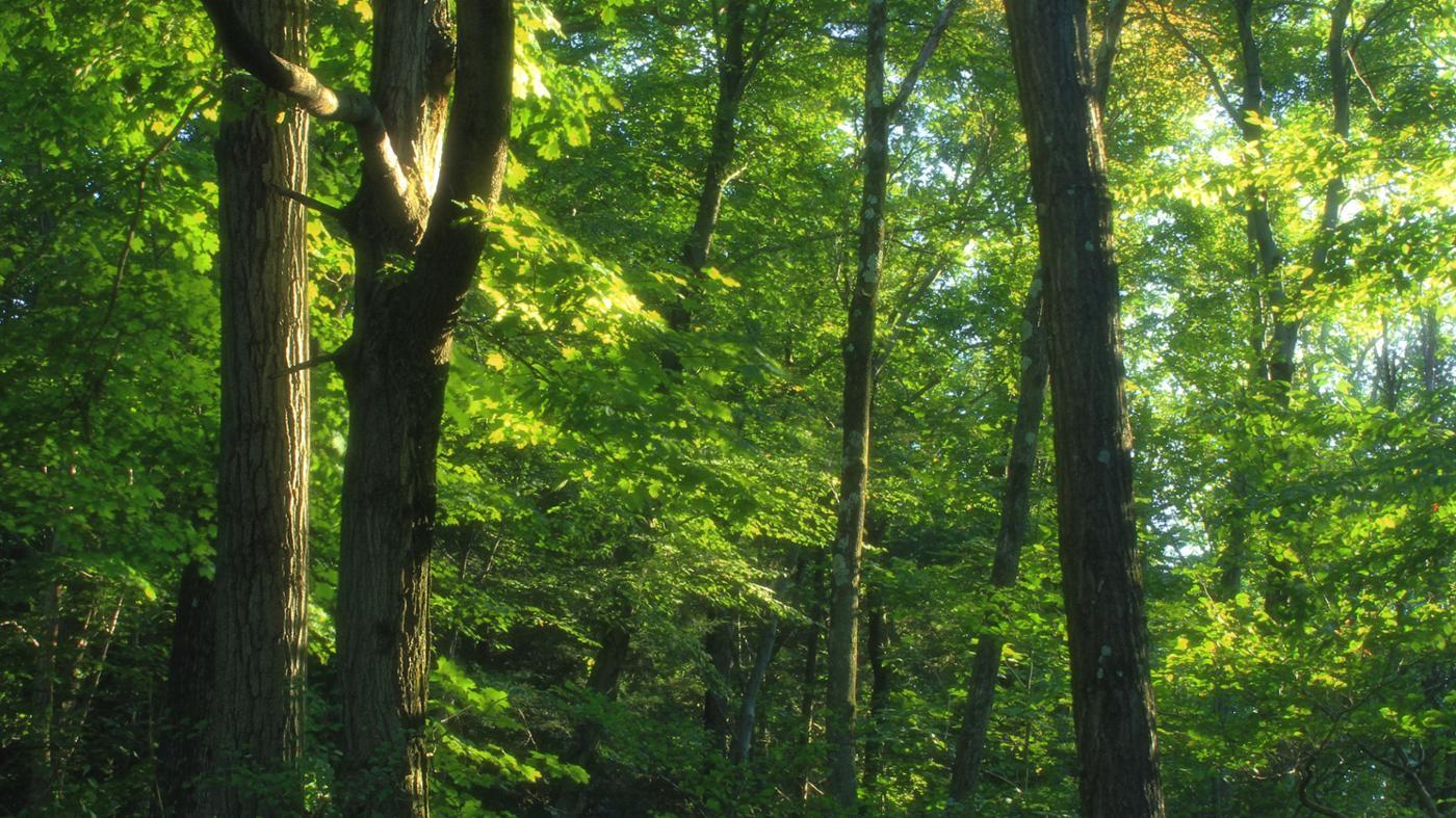 animals-live-temperate-forests