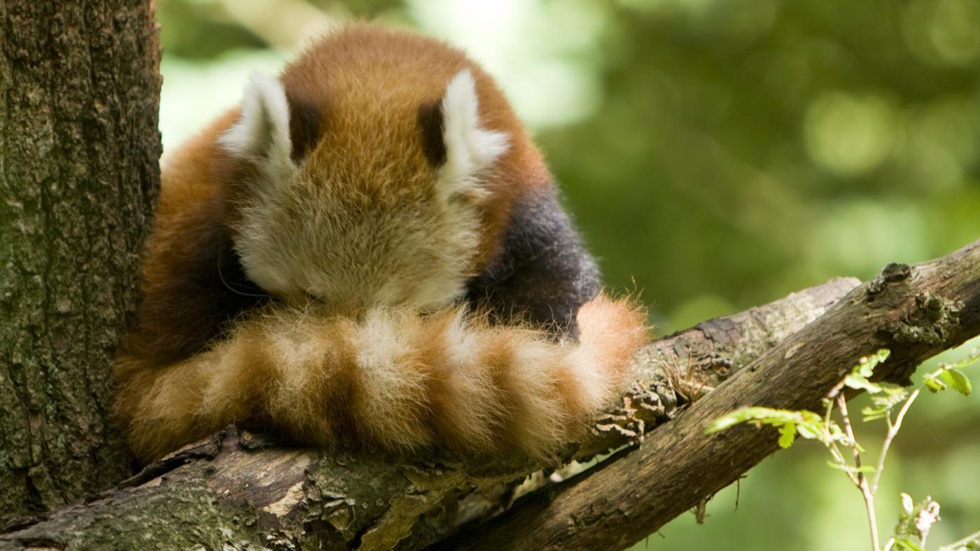 animals-tails