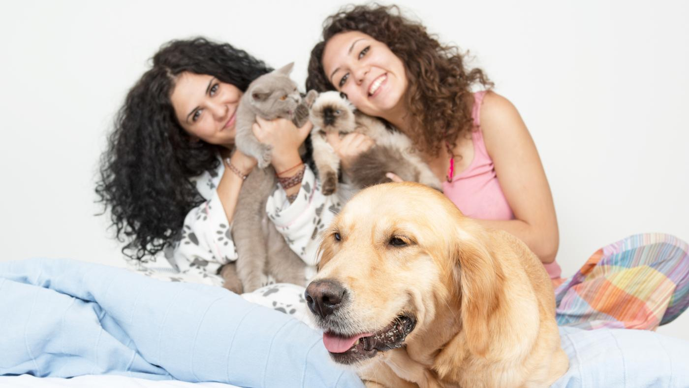 average-number-pets-per-household