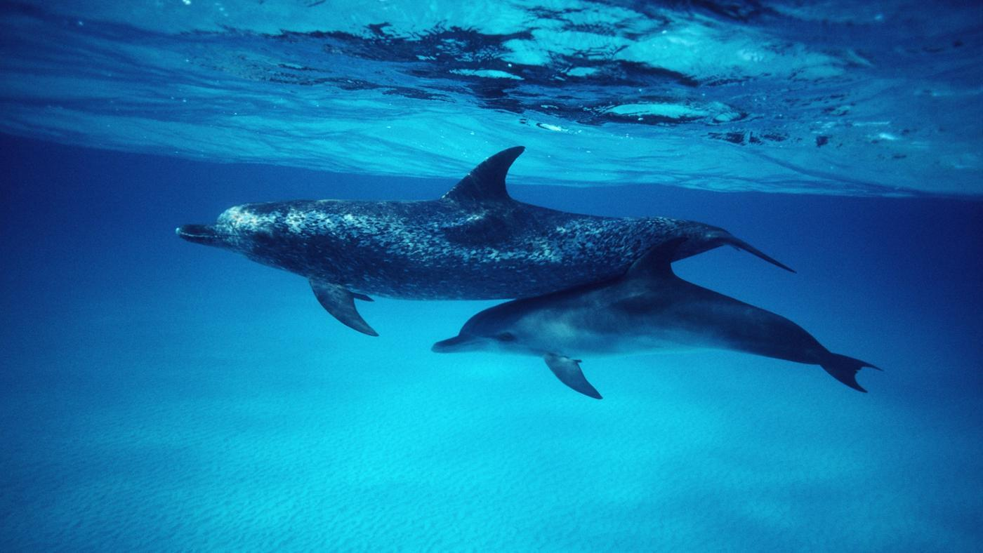 baby-dolphins-called