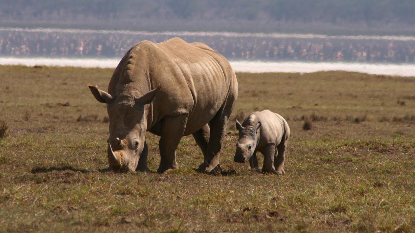 baby-rhino-called
