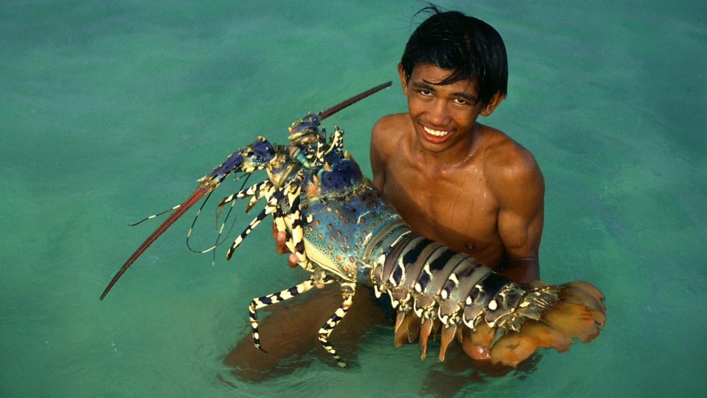 big-largest-lobster-ever-recorded