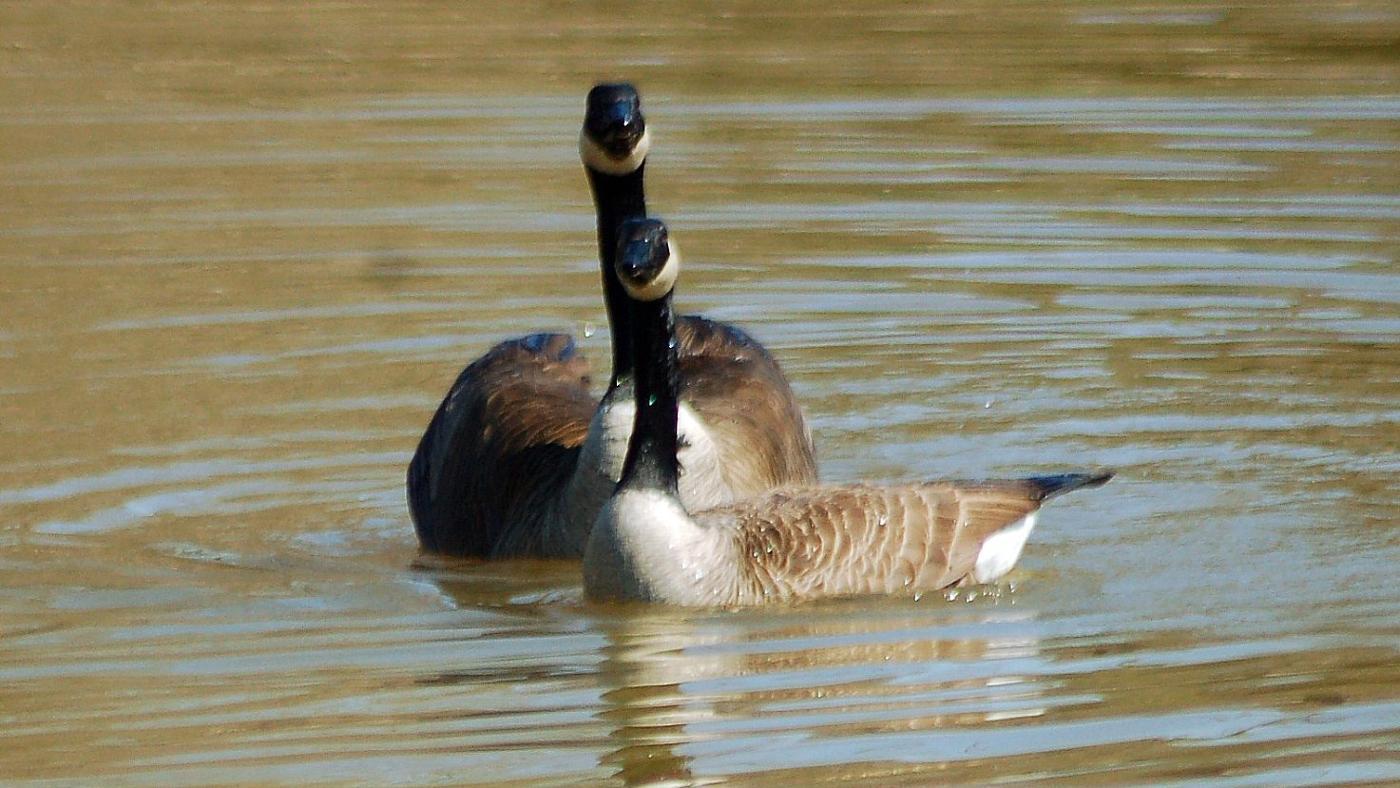 birds-reproduce