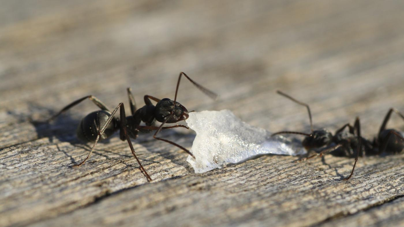 black-ants-out-house