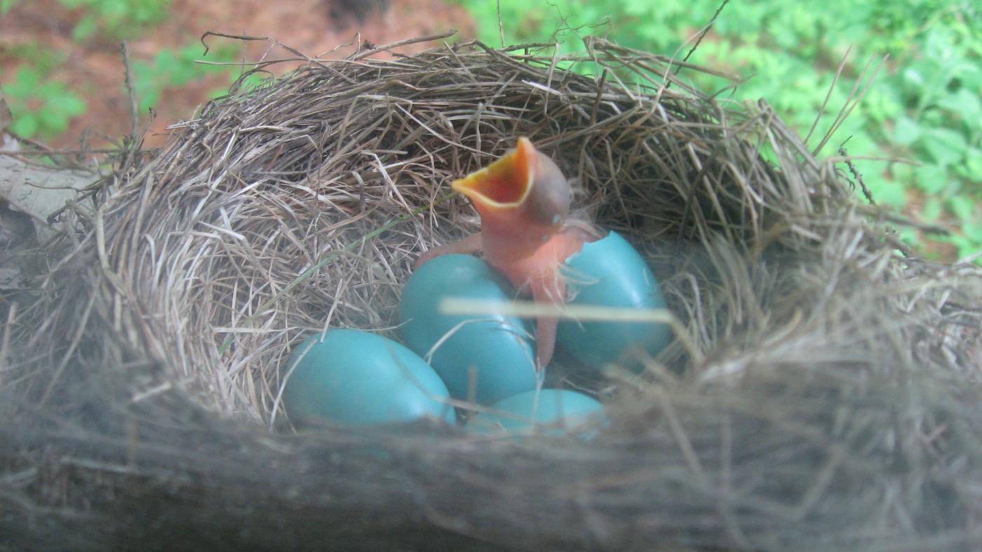 call-animals-lay-eggs