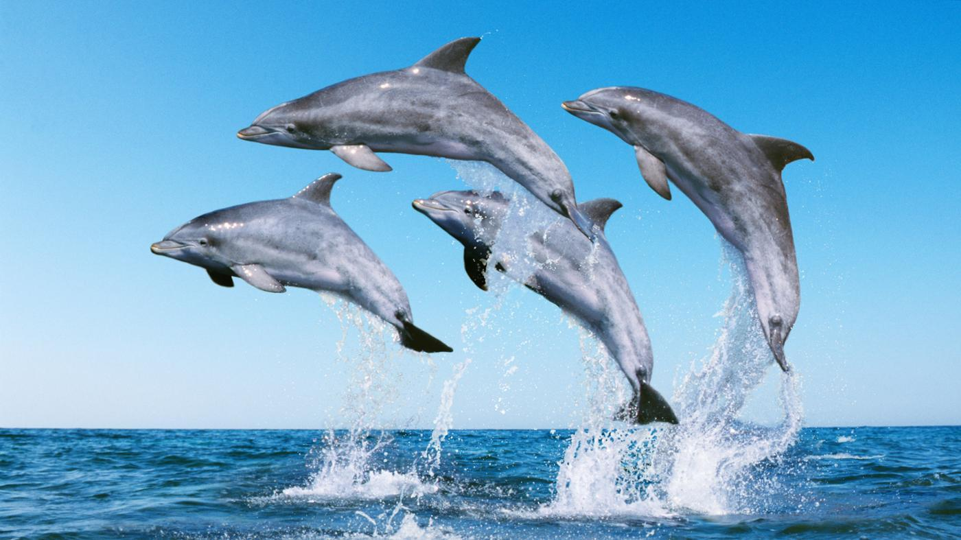 call-group-dolphins