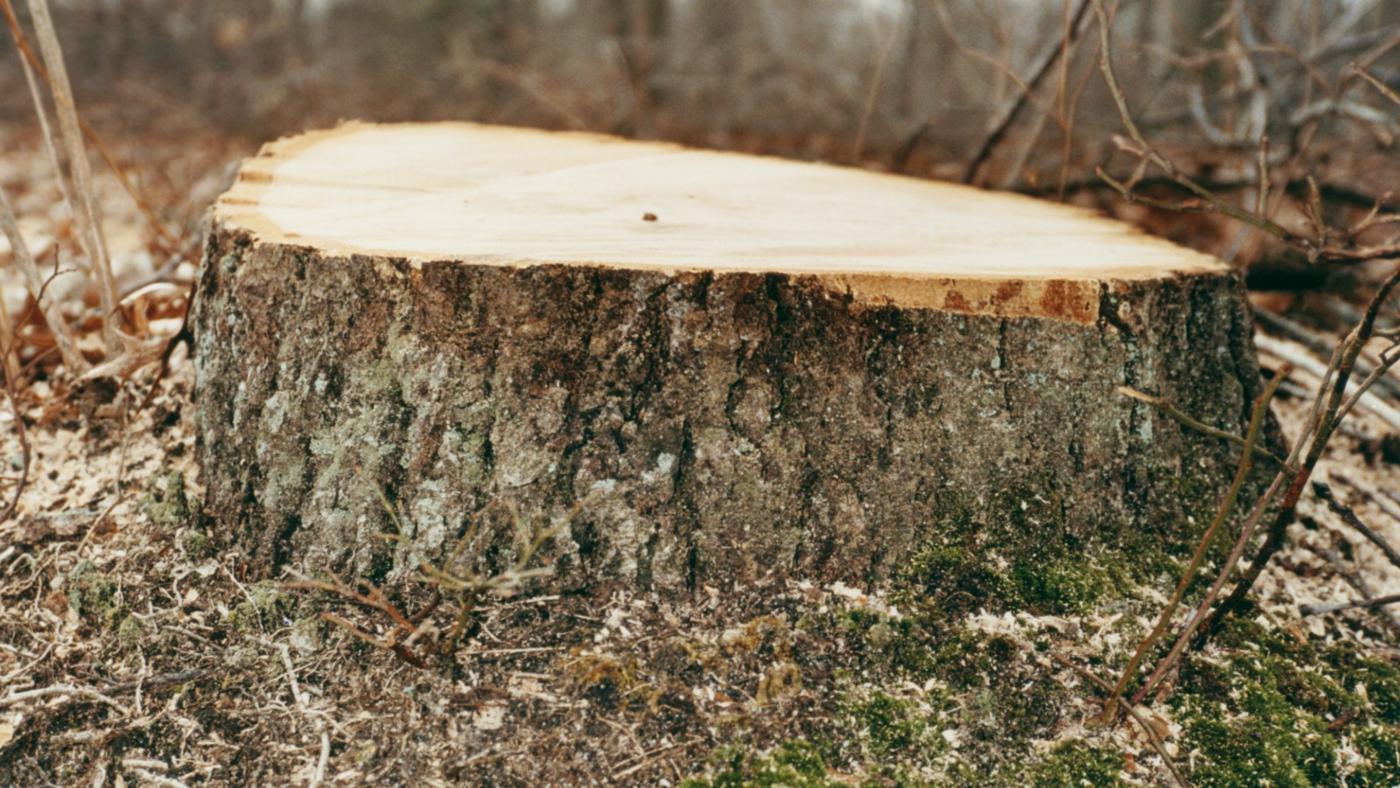 can-kill-tree-stump