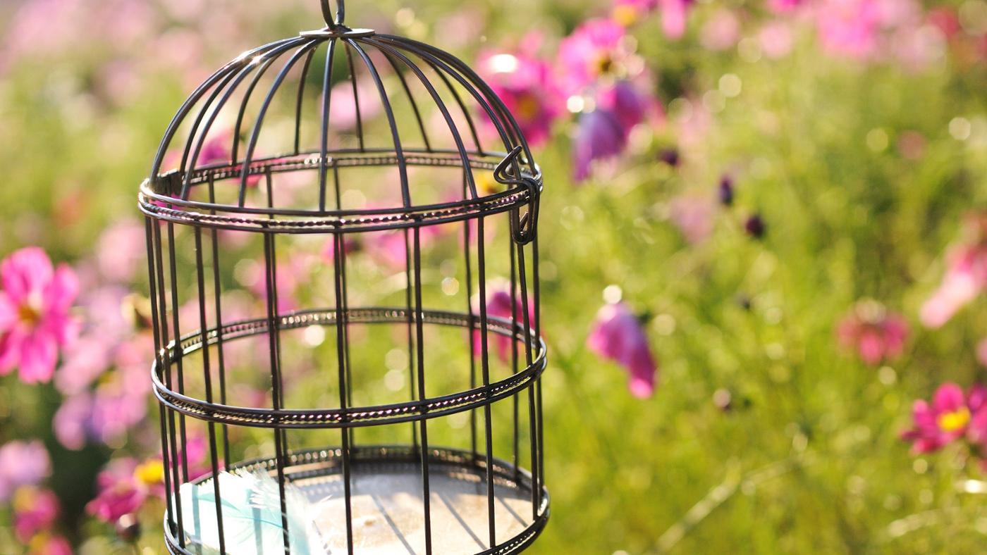 can-keep-hummingbird-pet
