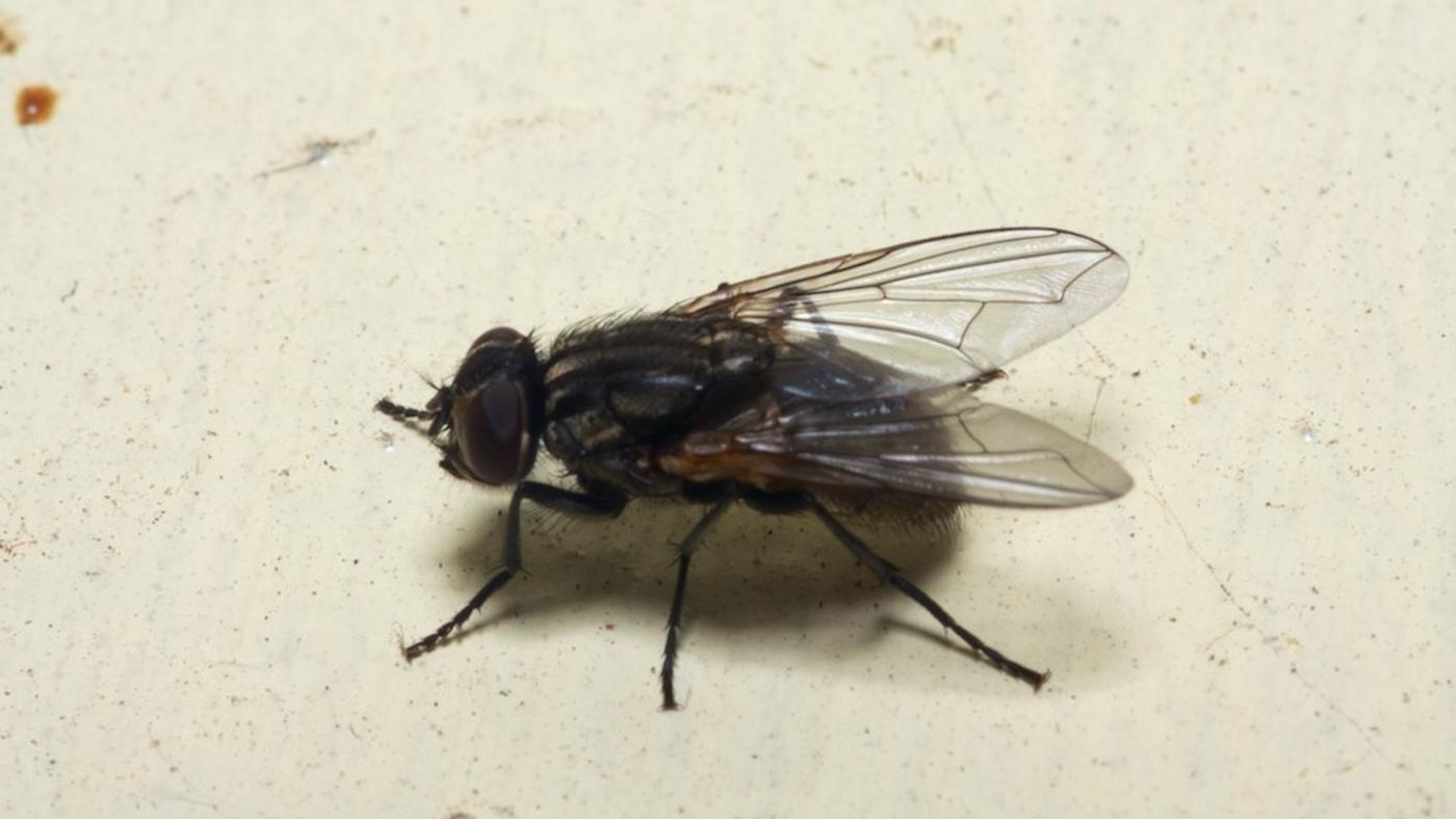 causes-house-fly-infestation