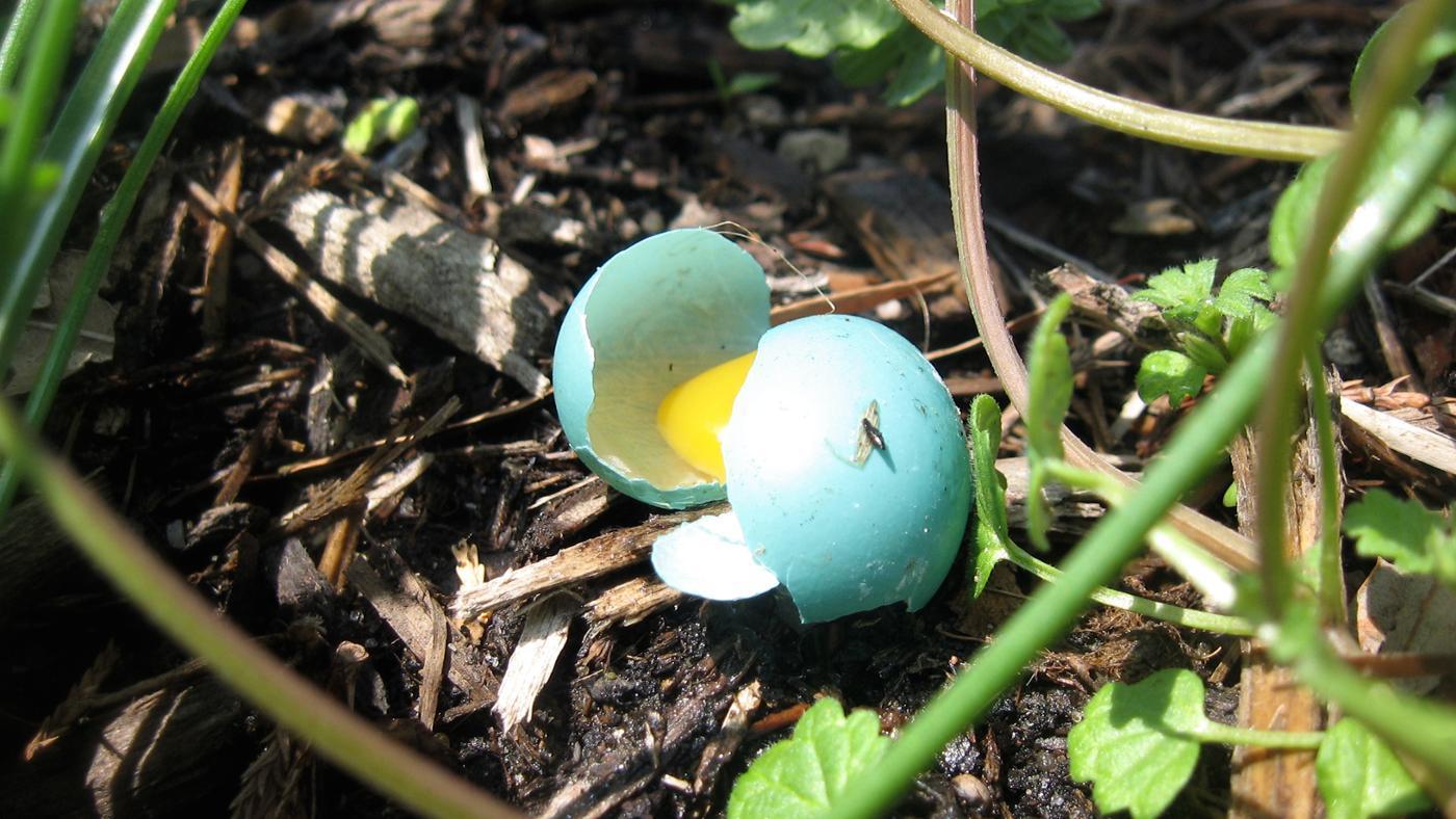 color-blue-jay-eggs