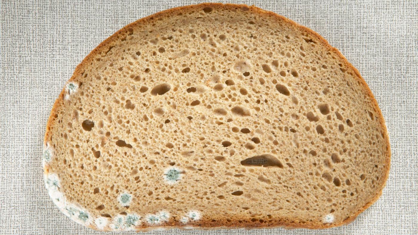 dangers-eating-moldy-bread