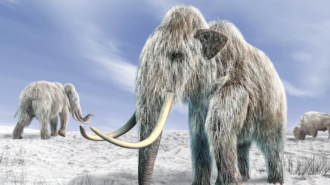 definition-extinct-species