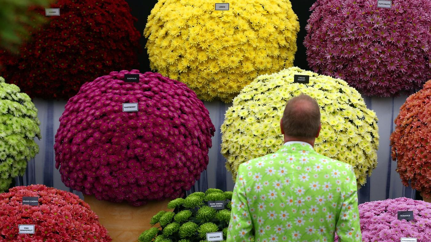 difference-between-garden-mums-florist-mums